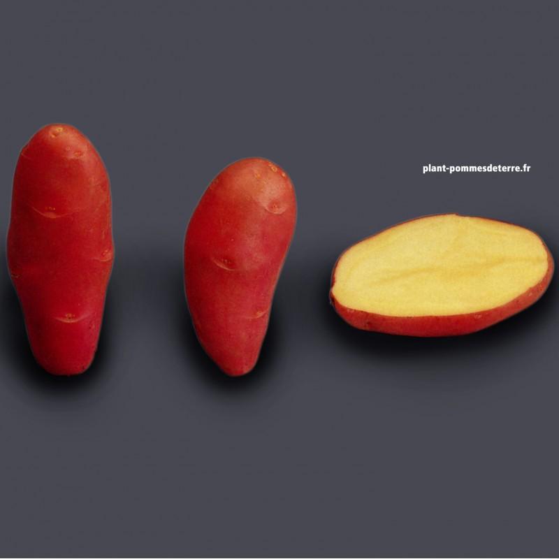 Achat plant pomme de terre Franceline