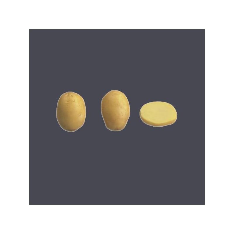 Achat plant pomme de terre Jaerla