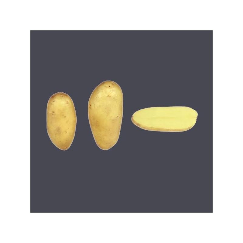 Achat plant pomme de terre Amandine