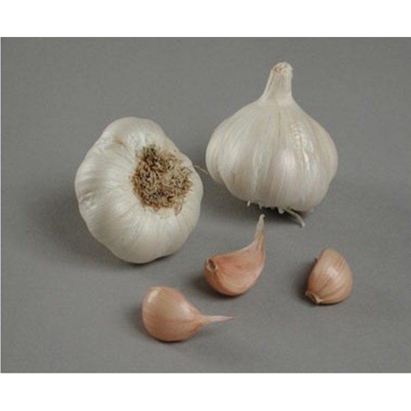 Achat plant ail Celdor