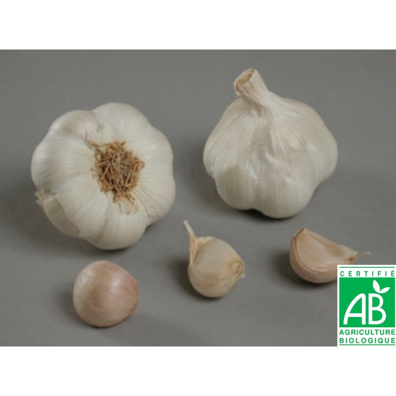 Achat plant ail Messidrome Bio