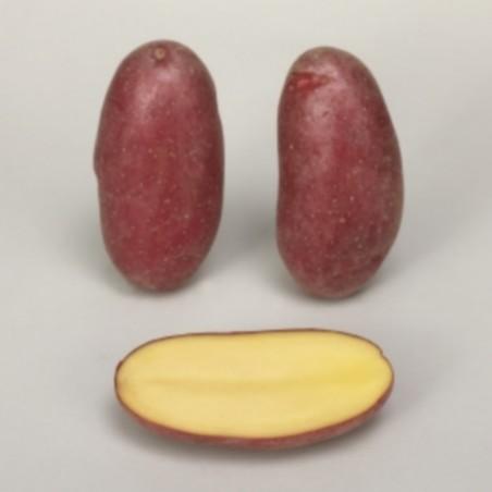 Achat plant pomme de terre Cheyenne