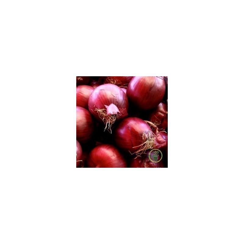 Achat plant oignon Red karmen