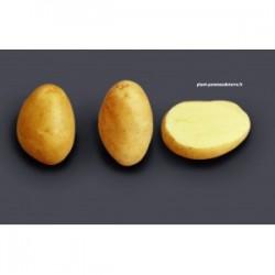 Achat plant pomme de terre Monalisa Bio