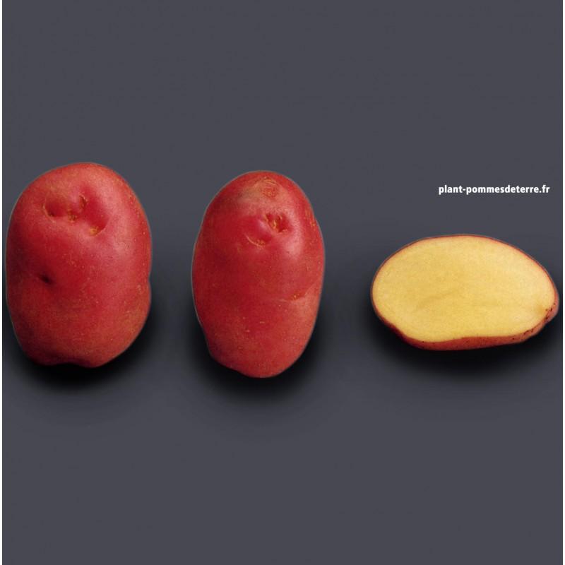 achat semence pomme de terre bio d sir e sur plant pommes de terre. Black Bedroom Furniture Sets. Home Design Ideas