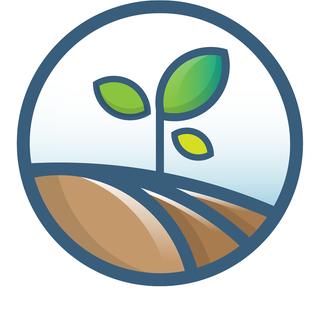 plant pommes de terre